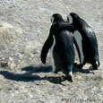 20061120_penguin