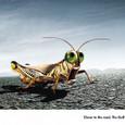 20090209_grasshopper