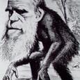 20091002_evolution_theory