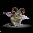 20110822_diablos_subspecies