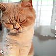 20131108_schrodinger_cat